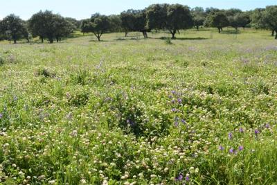 CICYTEX prepara un seminario online sobre la gestión de los pastos en la dehesa